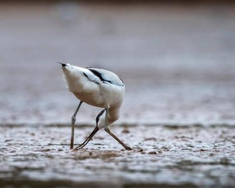 U100智能摄影手试用案例—淤泥严重的鱼塘