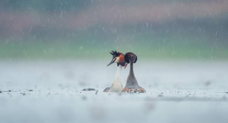 07《雨中情缘》D4_7003