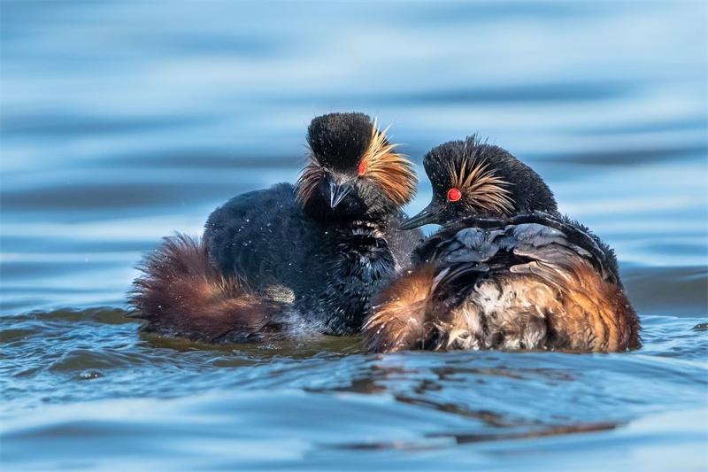 智能摄影手 助我轻松拍摄珍稀水鸟