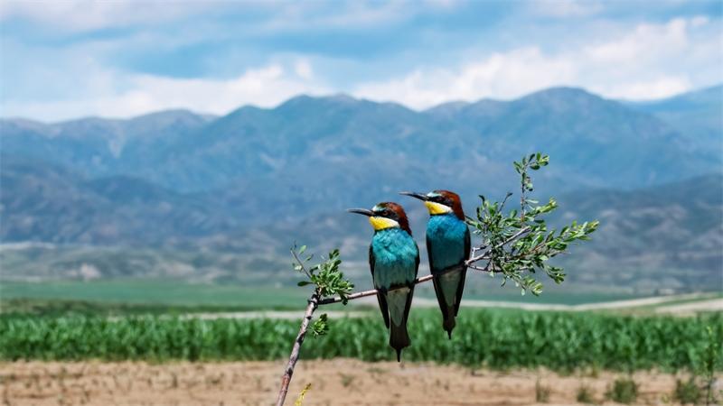 智能摄影手给野生动物摄影师带来了哪些新拍法?