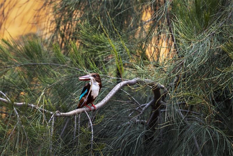 远离动物,近距离拍摄,不打扰动物--智能摄影手给生态摄影带来的价值